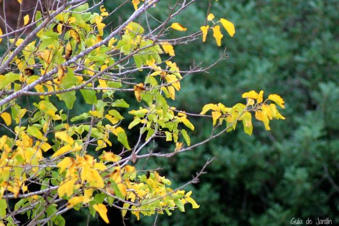 Arboles amarillos