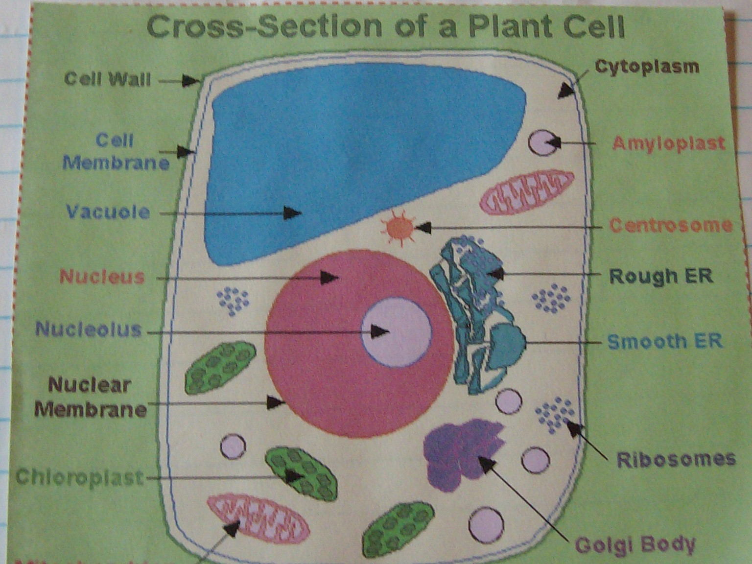 Plant Cells Made of Clay http://cabininthewoods-diane.blogspot.com/2011/04/little-science-anyone.html