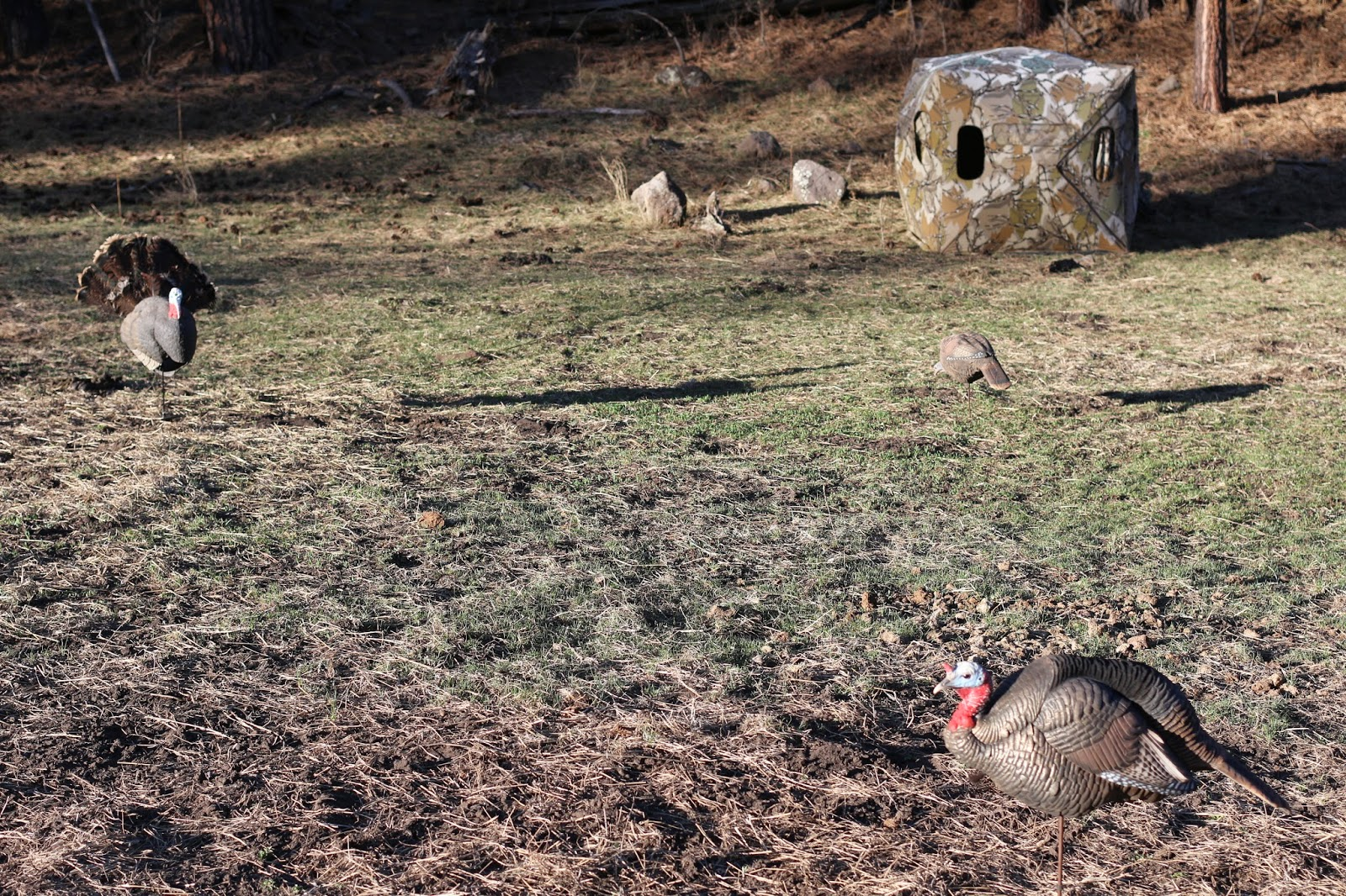Arizona+Turkey+Hunting+with+Jay+Scott+Outdoors+5.JPG