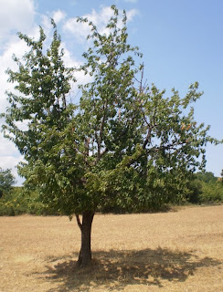 Φυτεύω δέντρα παντού