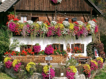 Ceciefave un balcone perfetto for Piante rampicanti da balcone