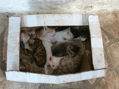 A box of cats