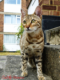 A Bengal comes calling!