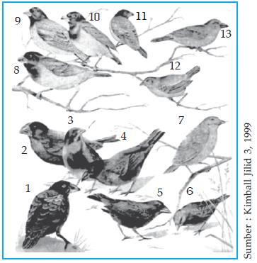 Macam Perbedaan morfologi bentuk paruh dari burung Finch di Kepulauan Galapagos