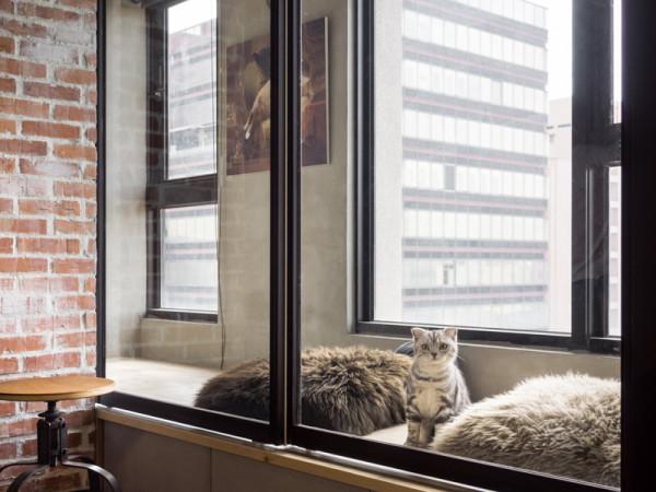 Paradies für Katzen in einer Wohnung gestalten - der Selbermachen-Tipp