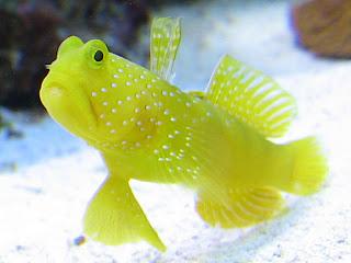 Top 5 starter marine fish for Beginner saltwater fish