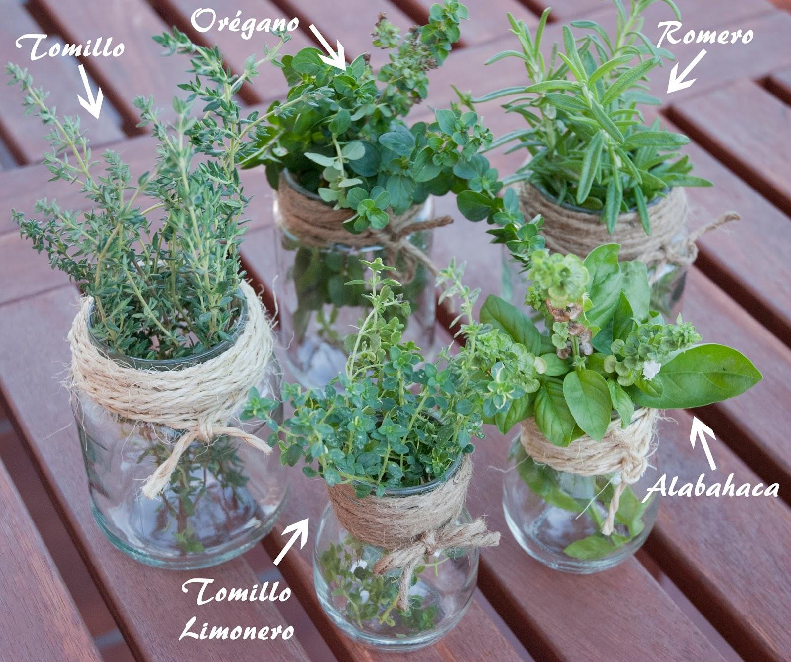 La receta by patricia valdivielso hierbas arom ticas for Plantas aromaticas para cocinar