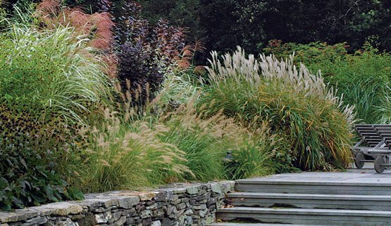 Knibb the pampas without the pompous for Ornamental grass bed design