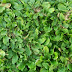 Jasa Tukang Rumput Cibubur | Tukang Rumput Taman Murah