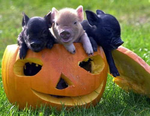 Funny halloween animals 25