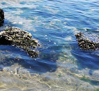 Spirulina I Ocean Avenue Shakes I WheySmart I Barbara Christensen