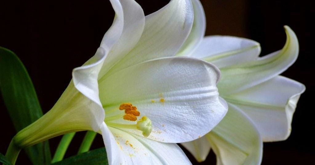 Bouquet de marie fleur de Lys Calla blanc avec Calla Lily