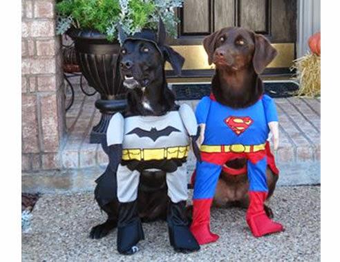 perros disfrazados de batman y superman