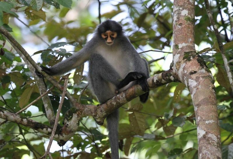Various - Borneo VA
