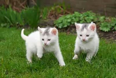 Mengapa Kucing suka buang kotoran di kebun tetengga???