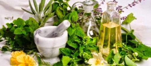 en çok enerji veren bitkiler, Şifalı bitkiler, şifalı bitkiler, Keçiboynuzu, Epimedium, Ginseng,