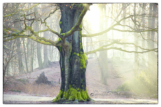 Awesome Photography By LarsVanDeGoor