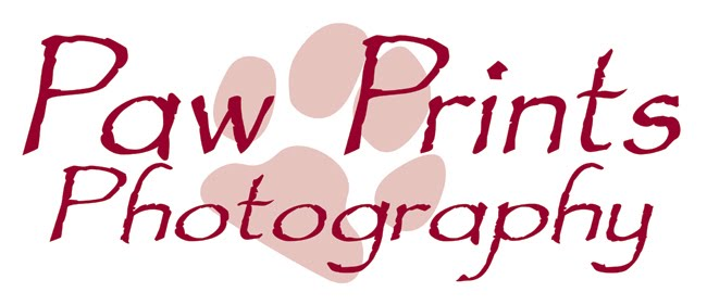 Paw Prints Photography by Lucinda May - Dallas/Fort Worth