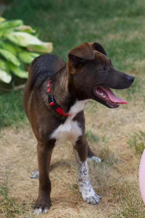 Identify My Dog Breed Mix