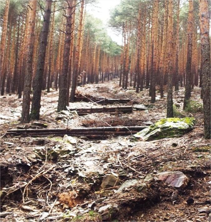 Ingenier a de la restauraci n ambiental y paisajismo for Asociacion pinar jardin