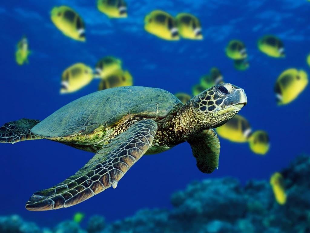 Flora y Fauna Marina: Tortugas Marinas