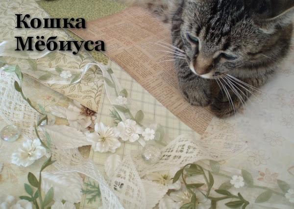 Кошка Мёбиуса