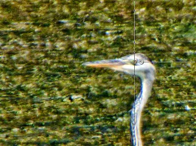 crosshairs, bird's eye, screenshot
