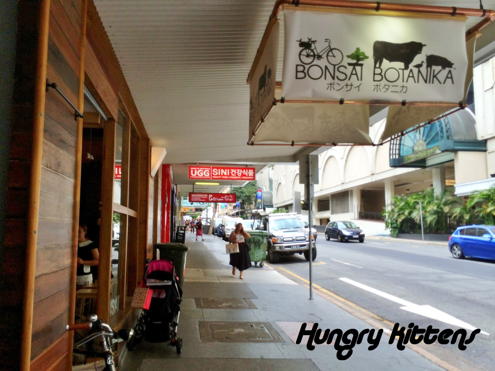 Hungry Kittens Bonsai Botanika For Coffee And Cake