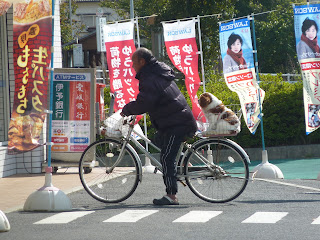 Middle aged, slightly balding man in a big jacket and trackpants on a womens bike with crocs on his feet and with a cute fluffy brown and white dog in a backet at the back. At at Lawsons convience store on Hakatajima on the Shimanami Kaido
