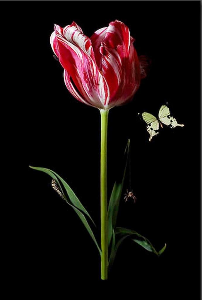 imagenes-de-flores-exoticas-en-fotos