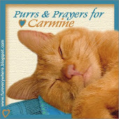 Purrs and Prayers for Carmine