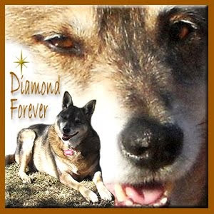 RIP SWEET DIAMOND