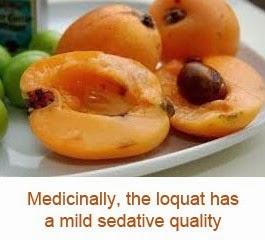 loquat health benefits