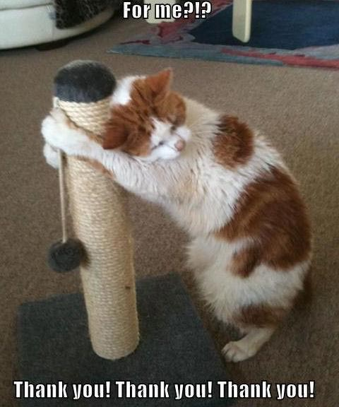 Funny Thank You Cat Memes : Funny lol cats project cool