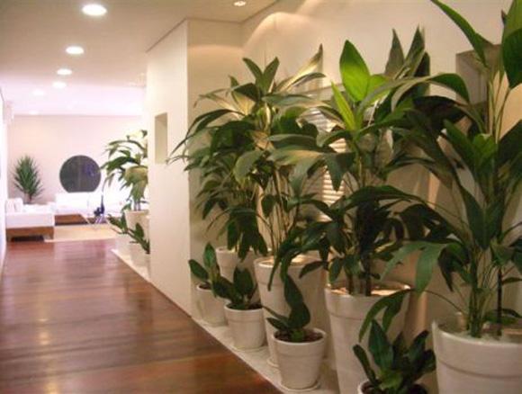 Cultivar plantas e flores, mexer coma terra, plantar, alimentar e