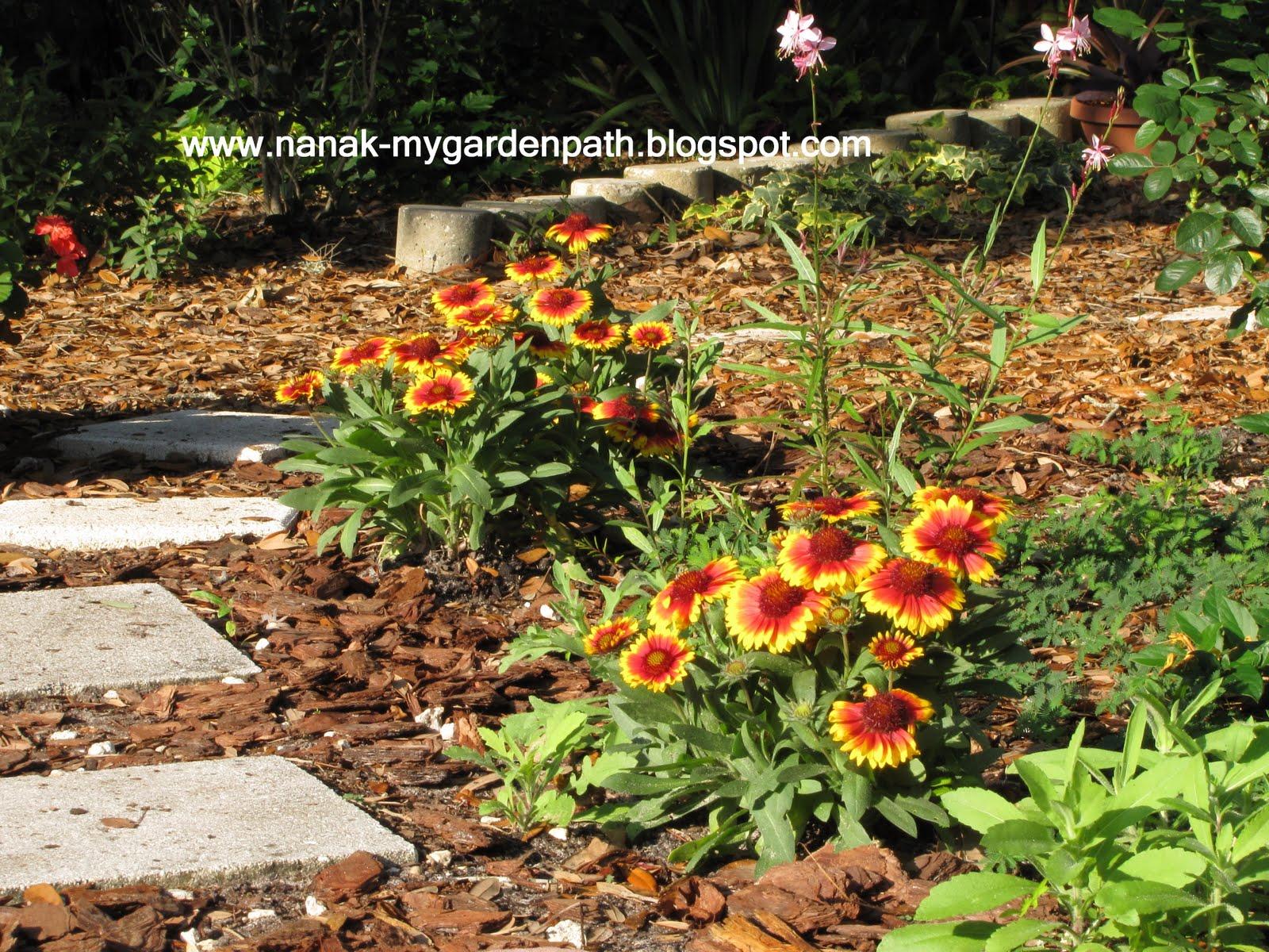 My Garden Path: Blanket Flowers