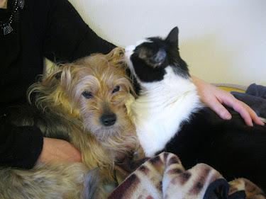 Ai gatti riesce senza fatica ciò che resta negato all'uomo:attraversare la vita senza fare rumore