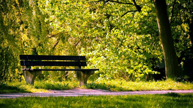красивое фото скамейки в парке под деревьями