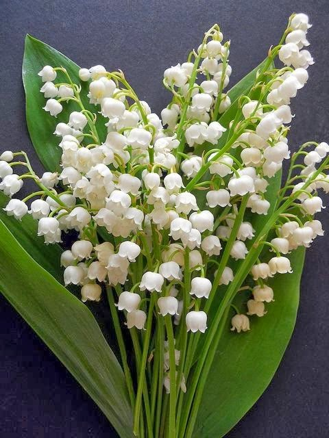If someone or animal eats any part of lily of the valley get them
