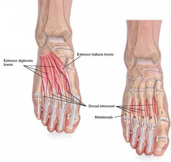 Pijn bovenkant voet bij tenen