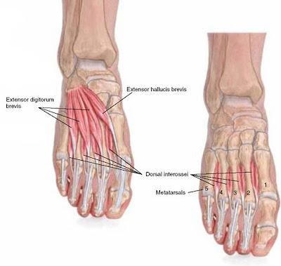pijn in knie na hardlopen