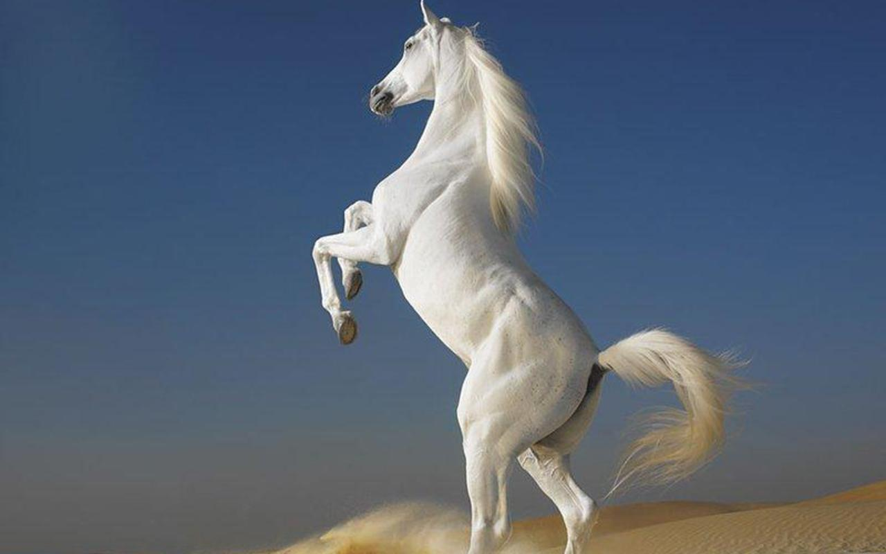 Simple   Wallpaper Horse Ipad - horse+wallpapers+hd+(8)  Collection_939781.jpg