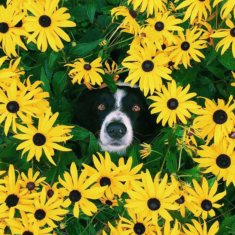 Encuentra a Momo: ¿Puedes ver al perro en todas estas fotos?