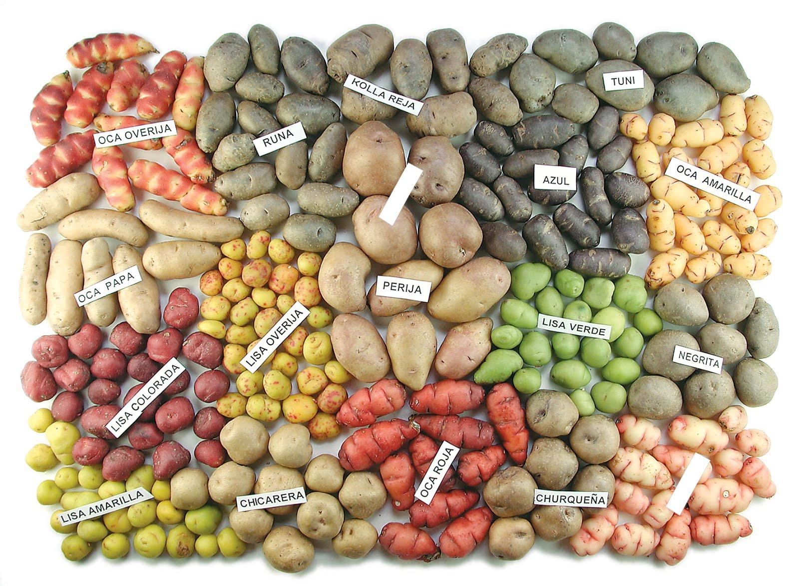 Slow Food promueve una LEY de ETIQUETADO DE PRODUCTOS TRANSGENICOS