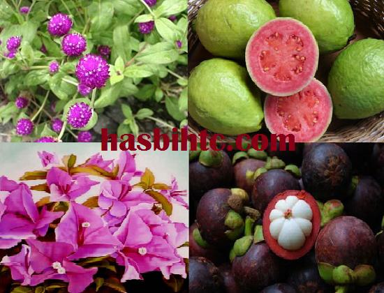Mengenal Aneka Tumbuhan Herbal Dan Khasiatnya