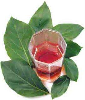 Bibit tanaman buah mangga alpukat-apukat-avomango-clonal-klonal 21-mangga asli pasuruan