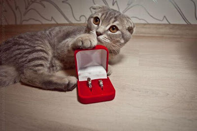 cat engagment funny