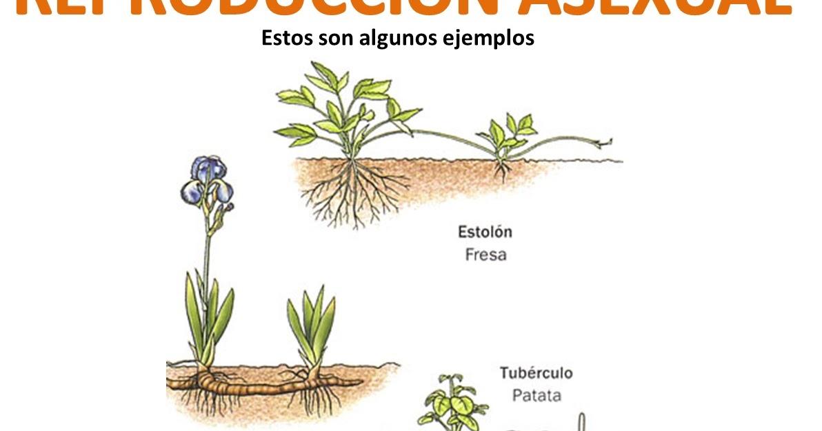 Ciencias naturales la reproducci n en las plantas - Cosas sobre las plantas ...