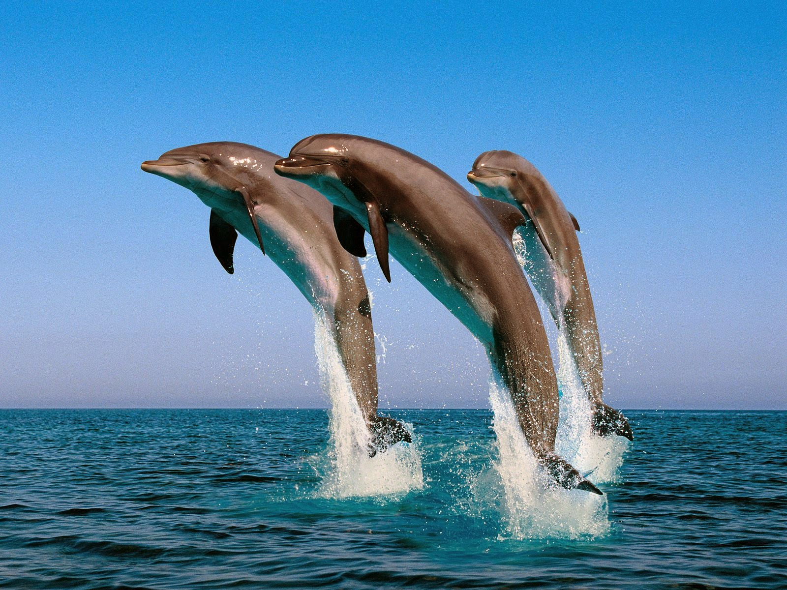 wild animal wallpaper hd free downloads   pet photos and wildlife