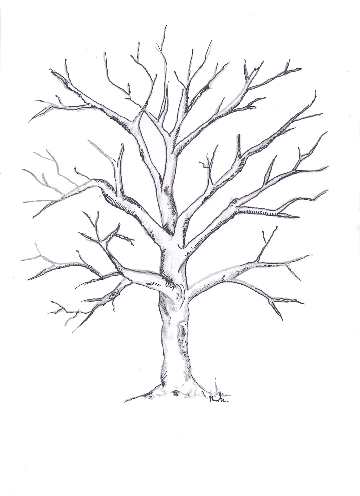Dibujos de arboles sin hojas para imprimir  Imagui